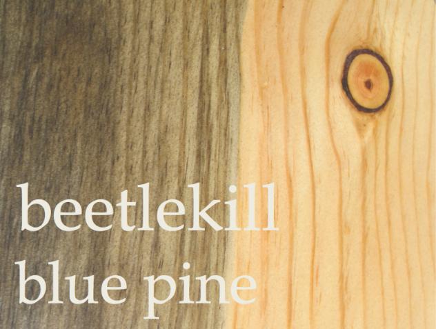 Beetlekill (Blue) Pine - Pinus Ponderosa